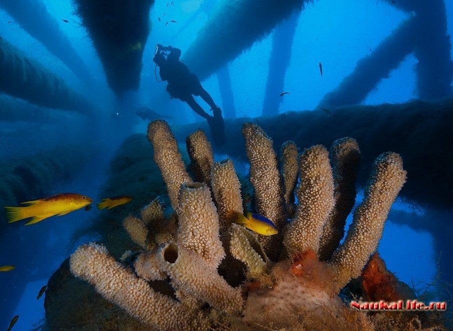 Тайный мирового океана
